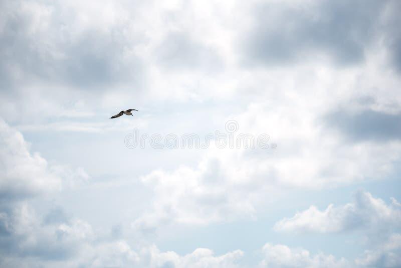 Птица летая высоко в небо стоковые изображения rf