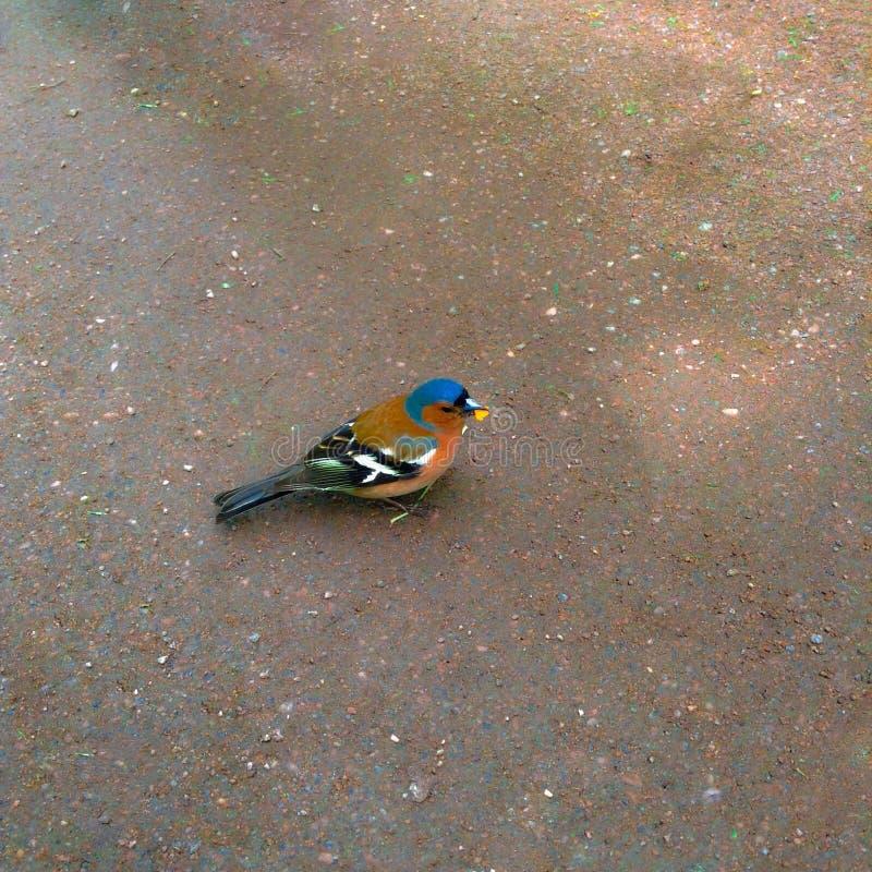 птица малая стоковая фотография rf