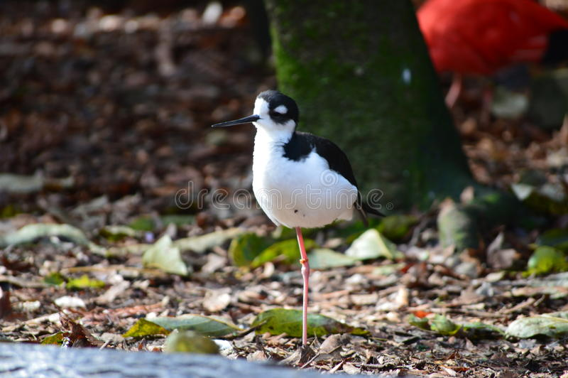 птица малая стоковое изображение rf
