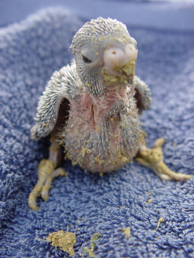 птица младенцев стоковое изображение
