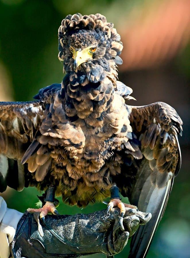 птица молит редкий вид стоковые изображения rf