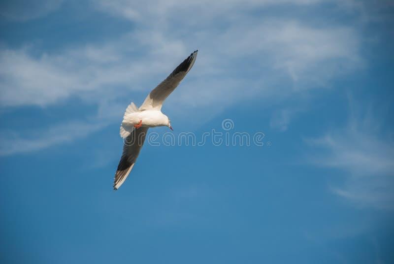 Птица мухы свободы над облаками и земли в ясном небе стоковое изображение