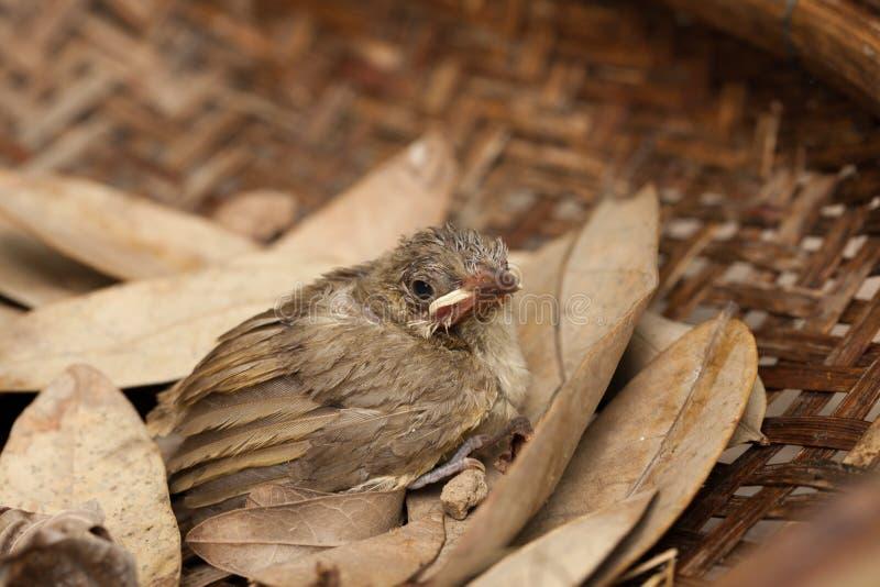 Птица младенца падает от дерева стоковые фото