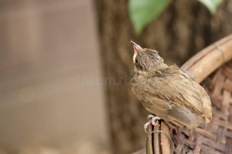 Птица младенца падает от дерева стоковая фотография rf