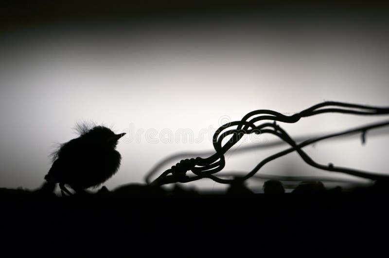 Птица младенца стоковое изображение rf