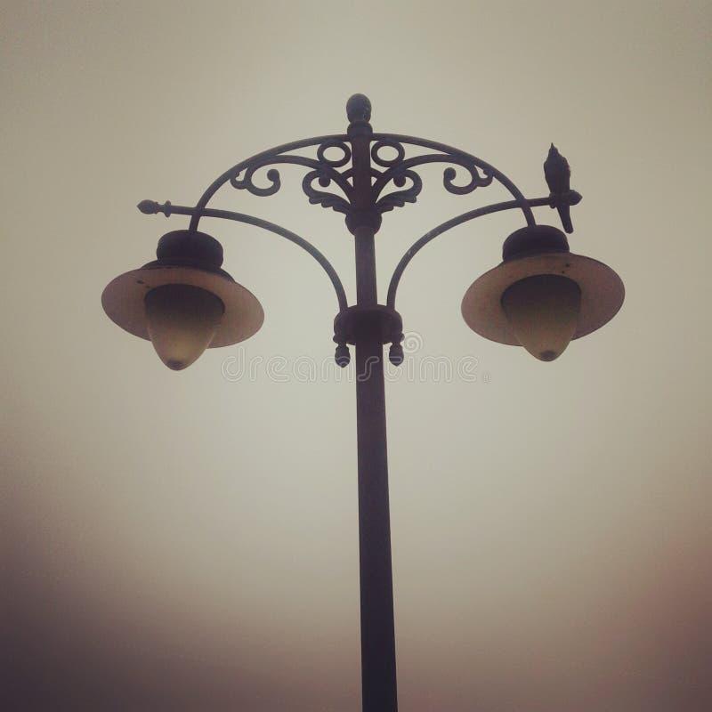 Птица на лампе beutifull стоковые фотографии rf