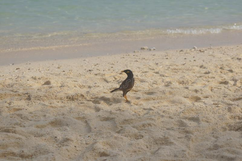 птица на берег песочная стоковое фото rf