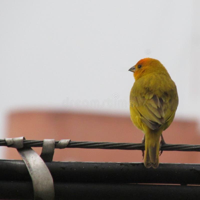 Птица на веревочке стоковая фотография