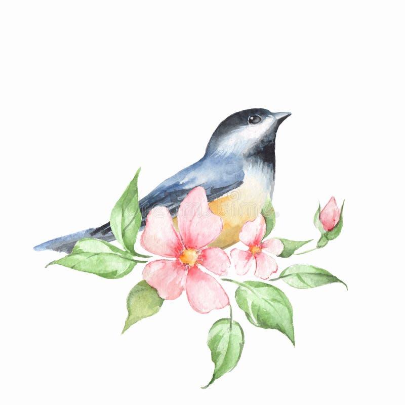 Птица на ветви самана коррекций высокая картины photoshop качества развертки акварель очень бесплатная иллюстрация