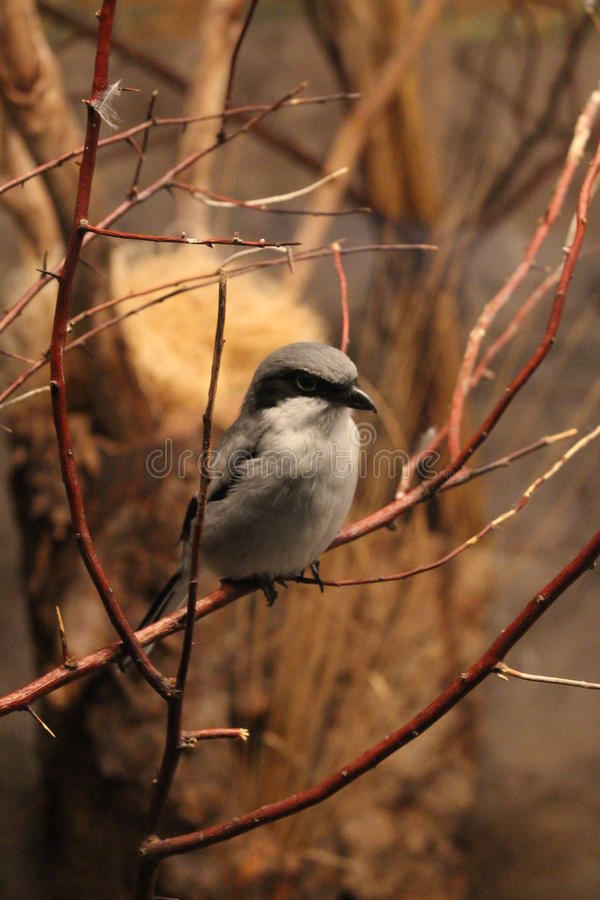 Птица на ветви стоковое изображение rf
