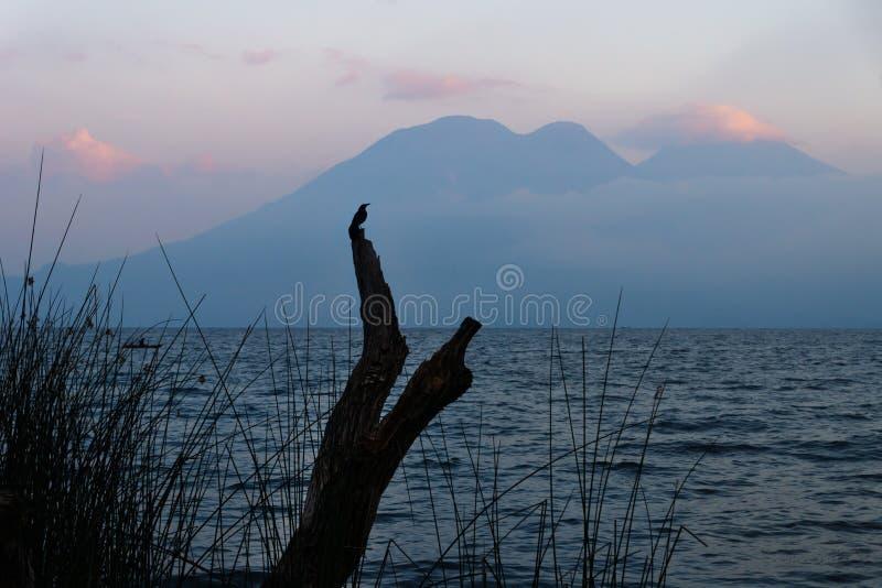 Птица на дереве во время захода солнца на озере Atitlan на береге San Marcos, Гватемалы стоковое изображение rf