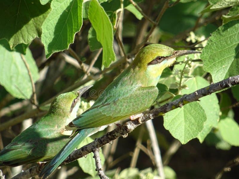 Птица на дереве в парке Yala стоковая фотография