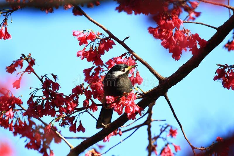 птица на дереве, Тайване стоковые фото