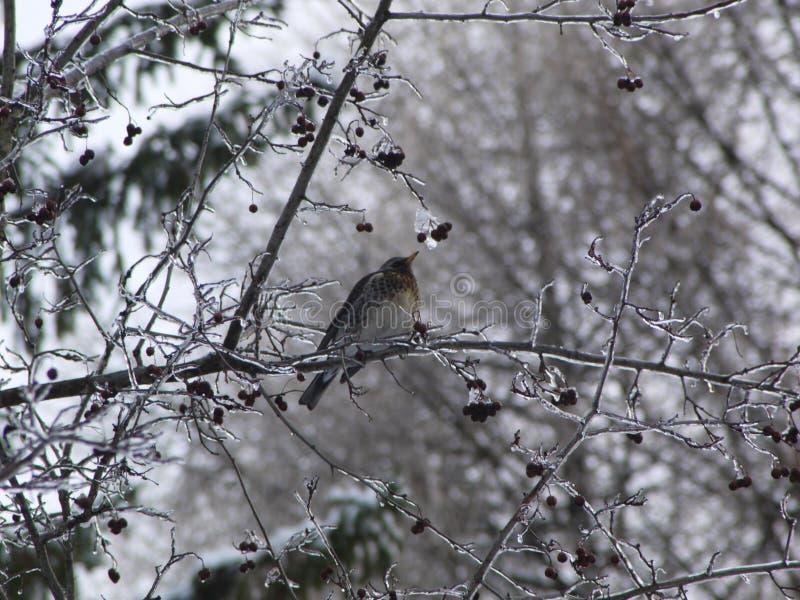 Птица на дереве льда стоковые фото