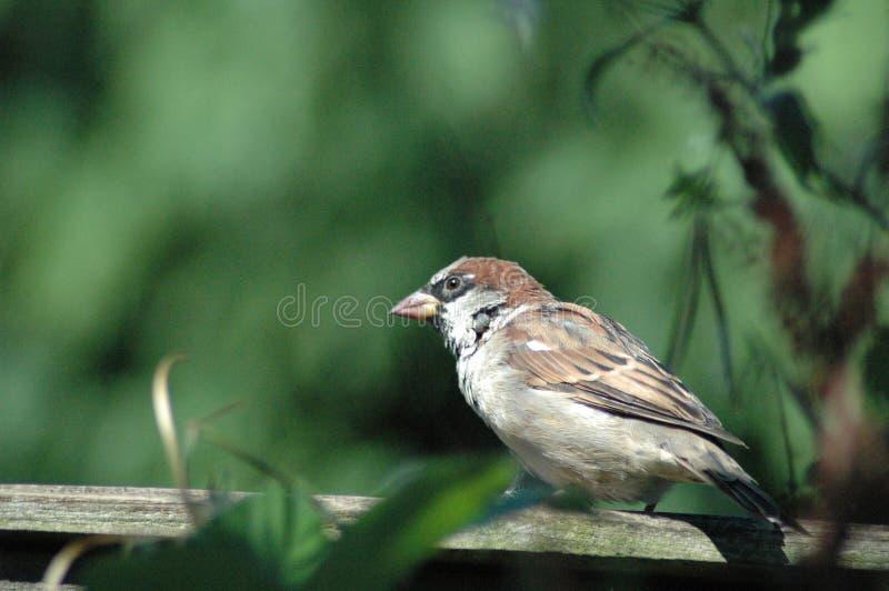 Птица на загородке стоковая фотография rf