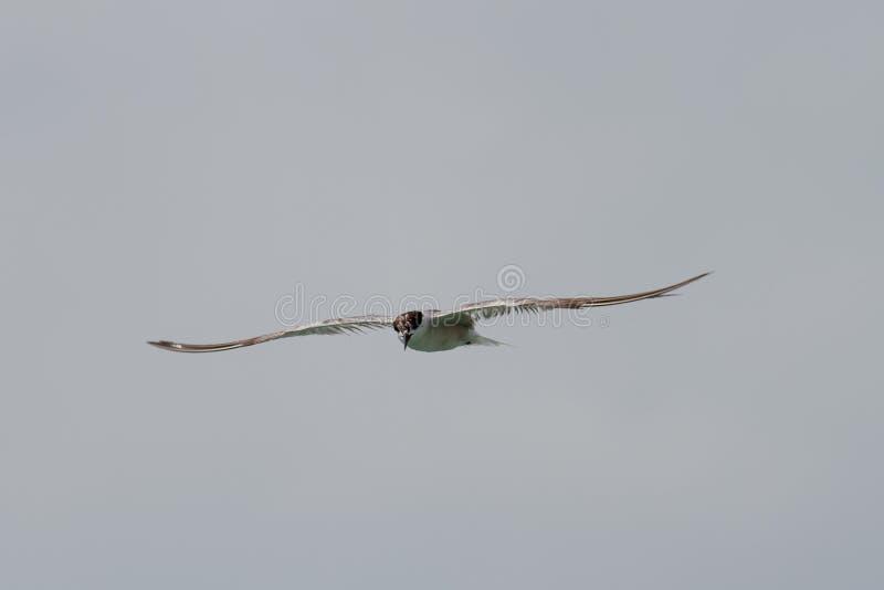 Птица на небе стоковое изображение