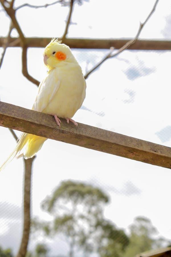 Птица на окуне стоковая фотография rf
