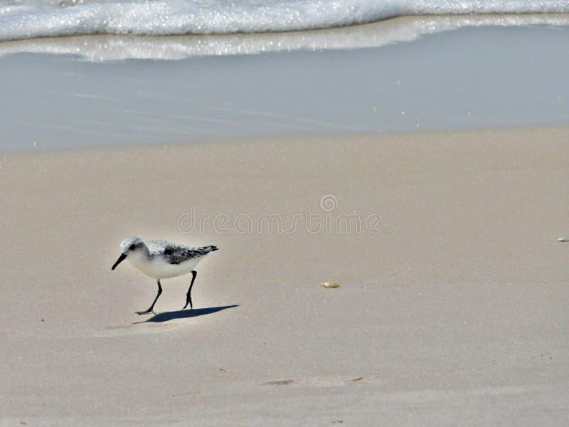 Птица на пляже стоковая фотография rf