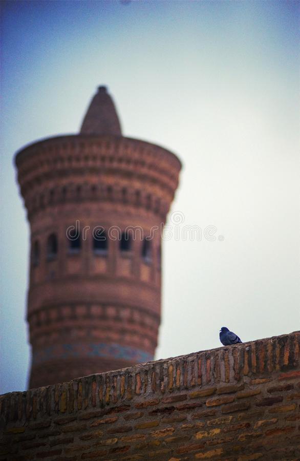 Птица на стене исторического старого старого ислама bulding, Бухаре, Узбекистане стоковые фото
