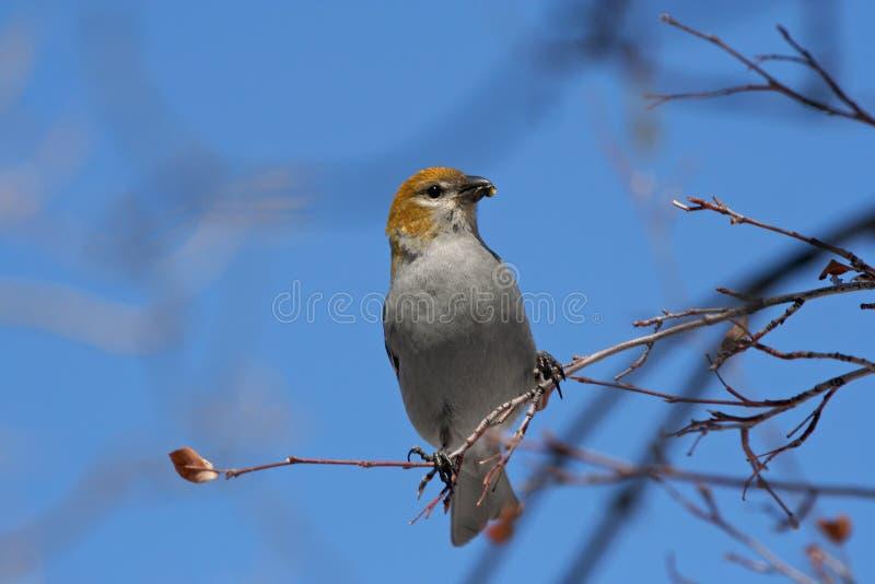 Птица на хворостине в городе парка стоковое изображение