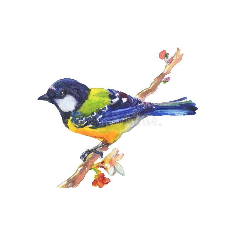 Птица, носящая реалистичный цвет водяного цвета стоковая фотография rf