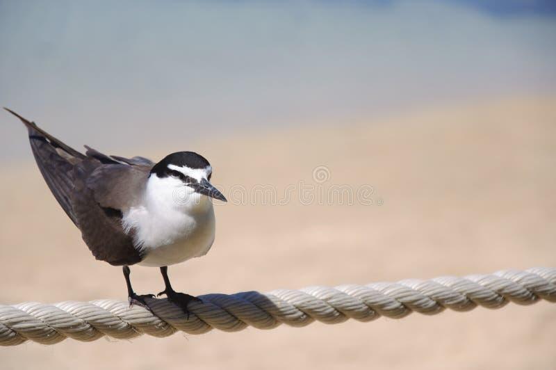 птица одинокая стоковое изображение rf
