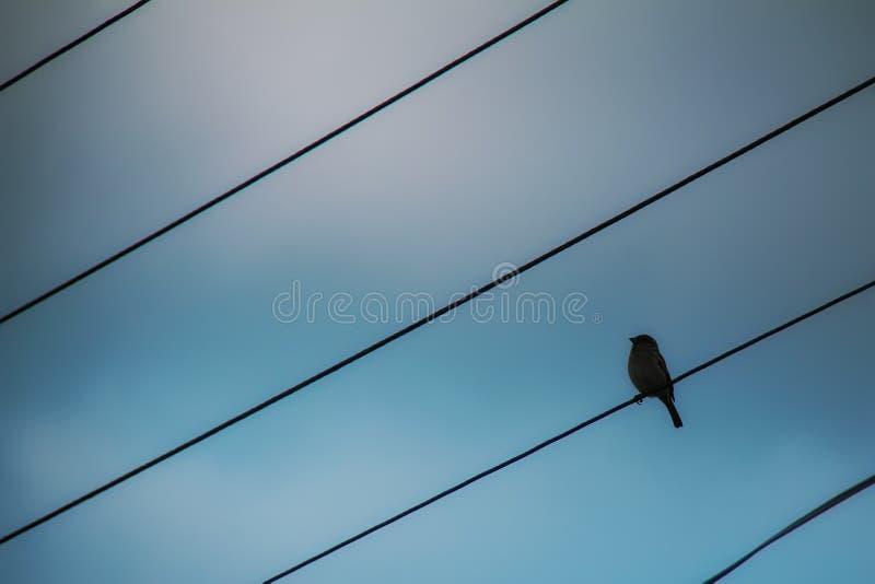 птица освобождает подобие стоковое изображение rf