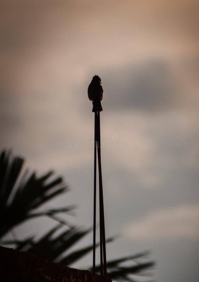 Птица отдыхает в железном пруте стоковая фотография
