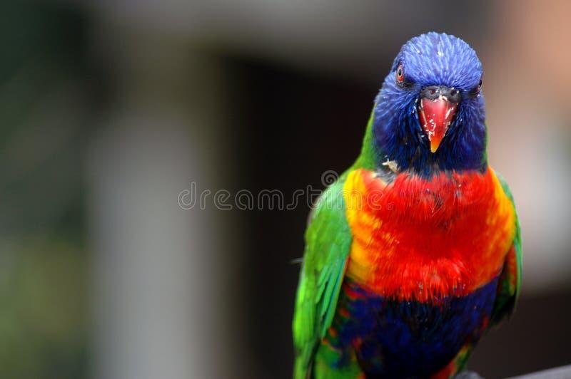птица покрасила стоковое изображение
