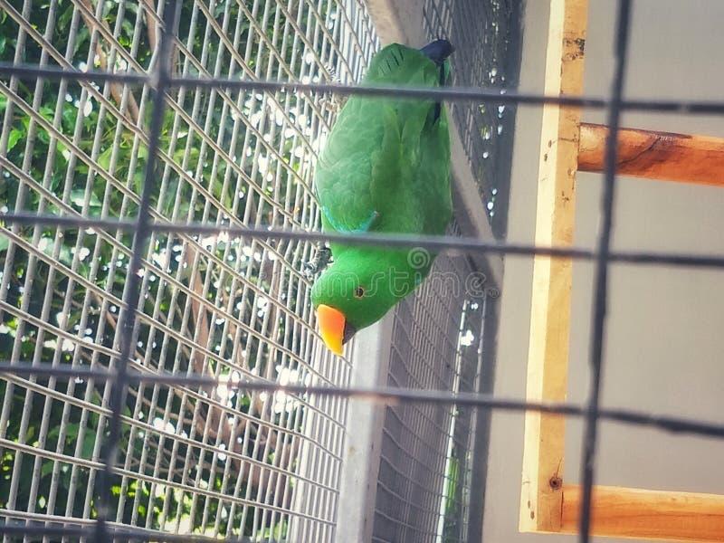 Птица попугая - животное & живая природа стоковые фотографии rf