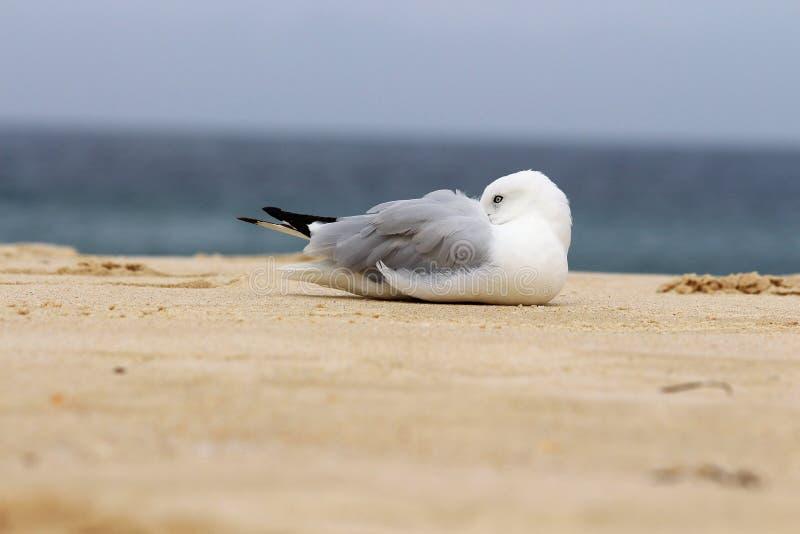 Птица принимает остатки внутри в пляже стоковое изображение rf