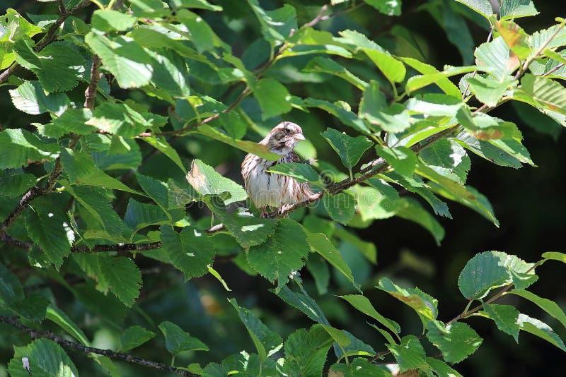 Птица пряча в bushee стоковая фотография rf