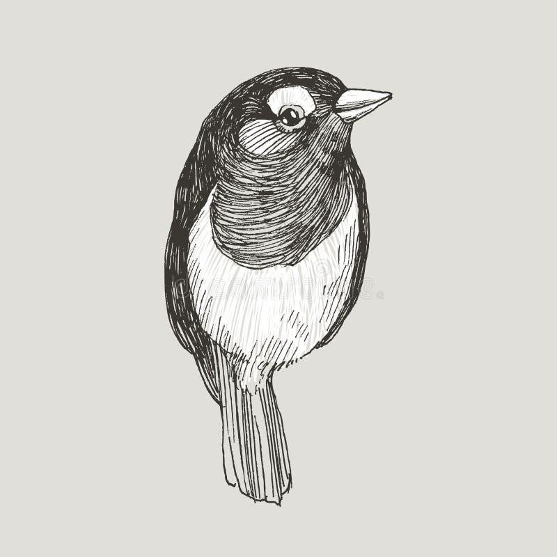 Птица робина векторной графики нарисованная рукой на ретро графическом стиле Чертеж чернил, винтажный стиль Милая птица для вашег бесплатная иллюстрация