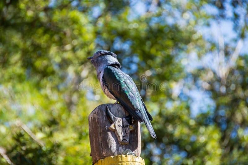 Птица садить на насест на тотемном столбе стоковые фотографии rf