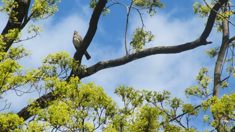 Птица сидит на дереве против голубого неба стоковые фото