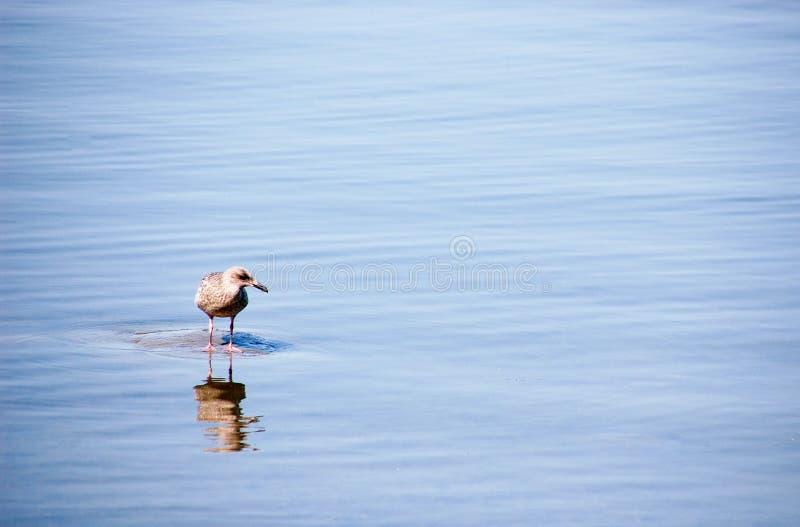Птица сидит на утесе в середине воды стоковая фотография rf