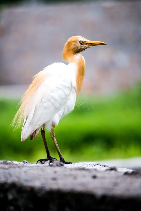 Птица сидя на стене около сельскохозяйственного угодья стоковая фотография rf