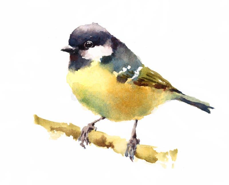 Птица синицы на ветви иллюстрация вектора