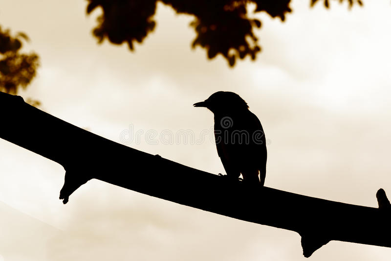 Птица силуэта на ветви стоковая фотография