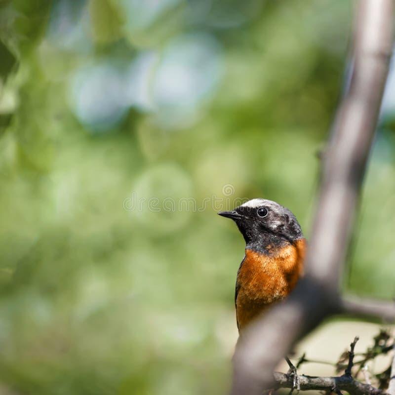 Птица сидя на ветви стоковое изображение
