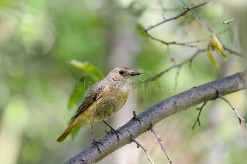 Птица сидя на ветви стоковая фотография rf