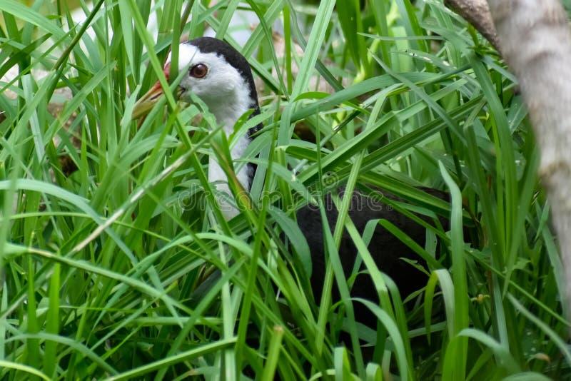 Птица смотря озеро для рыб стоковое фото