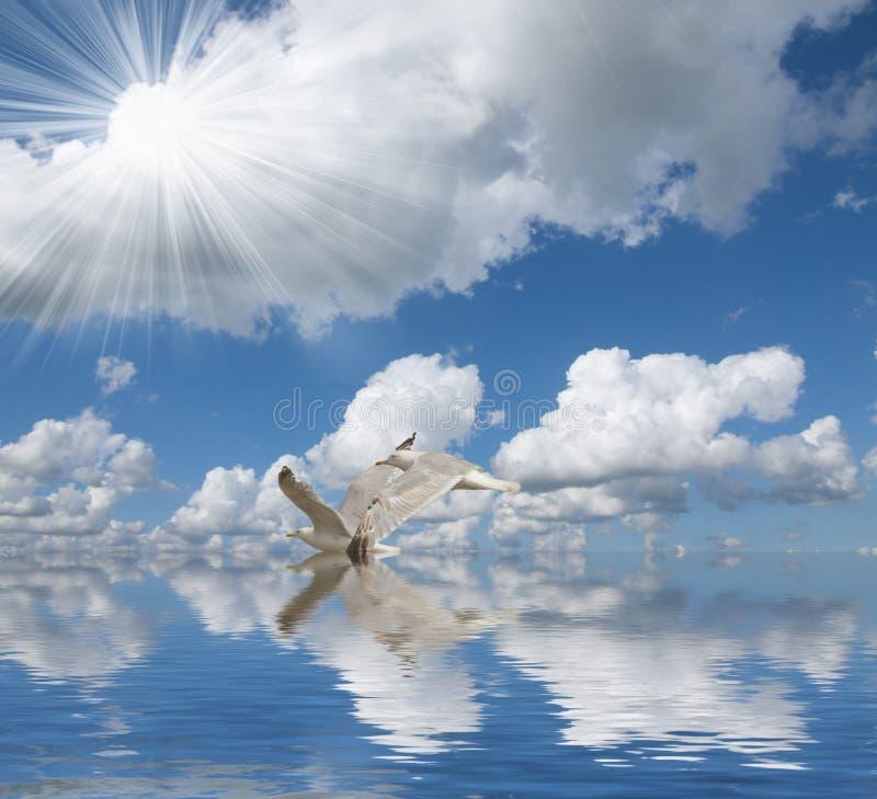 Птица Солнце, море и облака стоковое изображение rf