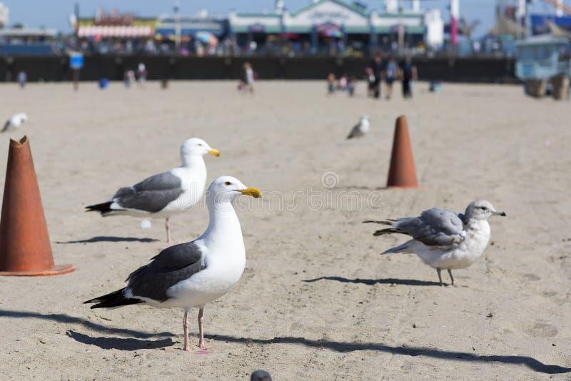 Птица стоит на береге Тихого океана стоковая фотография
