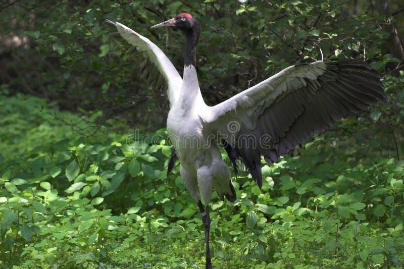 Download птица тропическая стоковое изображение. изображение насчитывающей крыло - 1184505