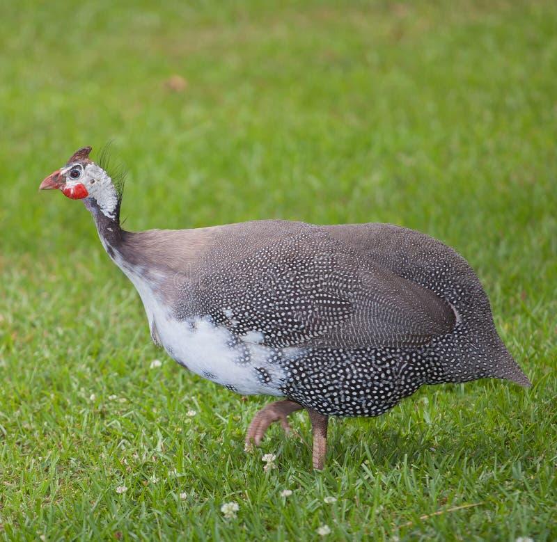 Download птица уродская стоковое изображение. изображение насчитывающей биографической - 41661471