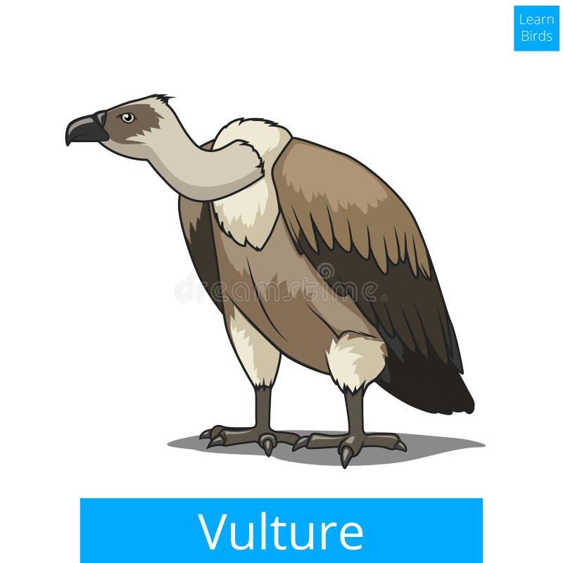Птица хищника учит вектор игры птиц воспитательный иллюстрация штока