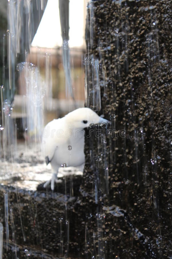 Птица стоковое изображение rf