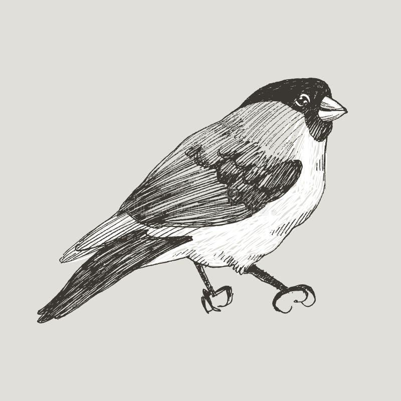 Птица bullfinch векторной графики нарисованная рукой на ретро графическом стиле Чертеж чернил, винтажный стиль Милая птица для ва бесплатная иллюстрация