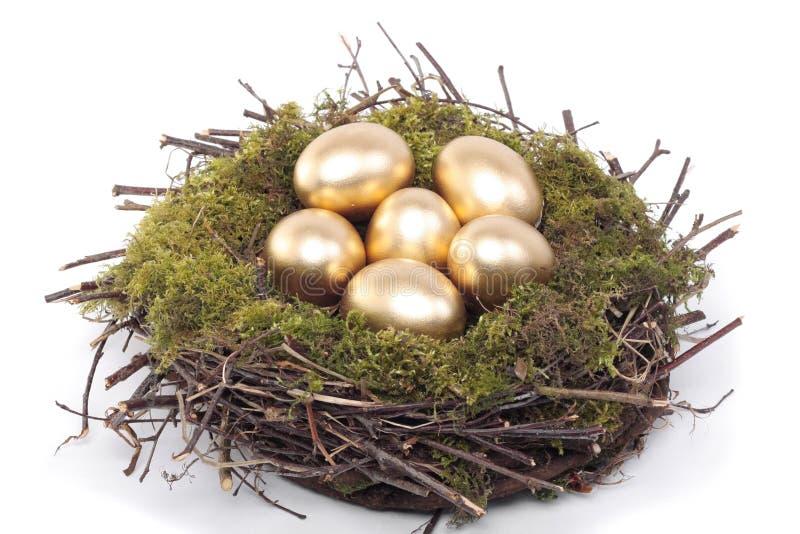 птица eggs золотистое гнездй над белизной стоковые изображения rf